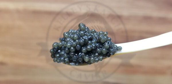 Paddlefish Caviar from Kelley's Katch Caviar
